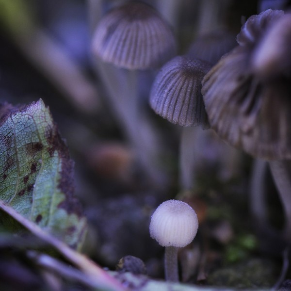 Bienveillance - macrophotographie d un groupe de champignons - Agnès Briand Photographe